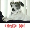 Excuse me!